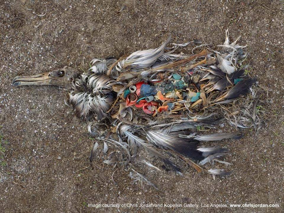 Marine Life Threatened by Plastics in Environment