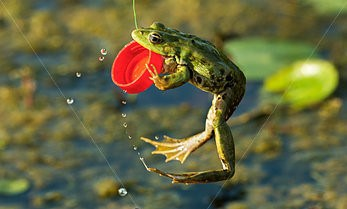 Frog With Plastic Bottle Top